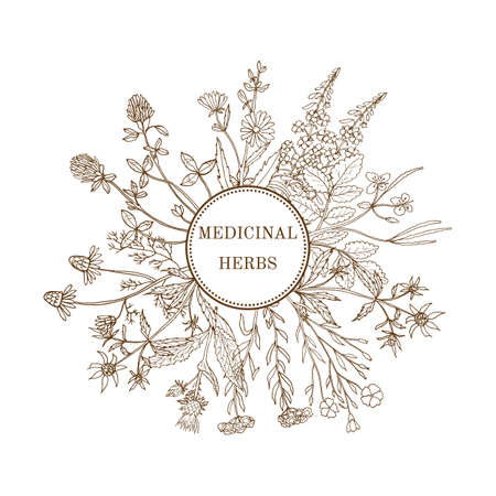Vintage collection of medical herbs. Hand drawn botanical illustration