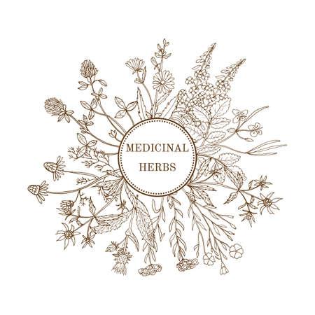 Vintage collection of medical herbs. Hand drawn botanical illustration