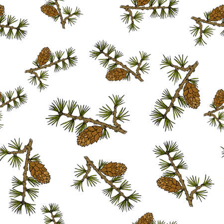 a bough: Larch cones and branches. Seamless pattern. Vector