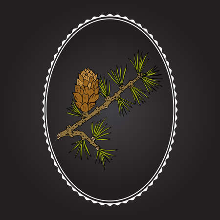 Larch (Larix decidua) branch with cone. Hand drawn botanical vector illustration Ilustração
