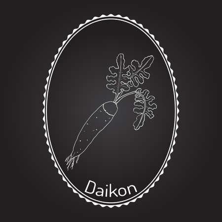 dikon: Daicon (Raphanus sativus), or white radish,  winter radish, oriental radish. Hand drawn with white frame.