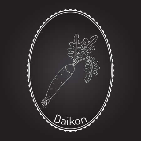 Daicon (Raphanus sativus), or white radish,  winter radish, oriental radish. Hand drawn with white frame.