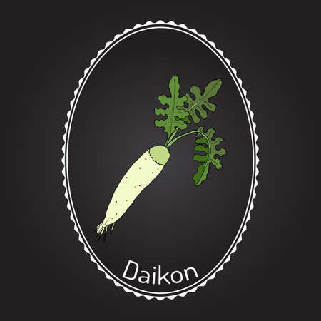 Daicon (Raphanus sativus), or white radish,  winter radish, oriental radish. Hand drawn with white background. Illustration