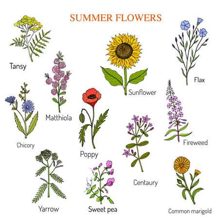 yarrow: Summer flowers set, vector illustration