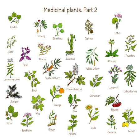 recogida de la cosecha de hierbas y plantas medicinales dibujadas a mano. conjunto botánico, ejemplo del vector.