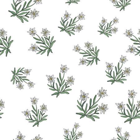 エーデルワイスのシームレスなパターン。ベクトル図  イラスト・ベクター素材