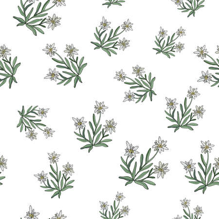 Edelweiss seamless pattern. Vector illustration