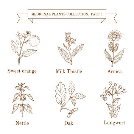 nettle: Vintage collection of hand drawn medical herbs and plants. Botanical vector illustration.