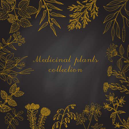 collezione Vintage di erbe e piante medicinali disegnati a mano. Set botanico, illustrazione vettoriale.