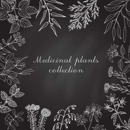 collezione Vintage di erbe e piante medicinali disegnati a mano. Set botanico, illustrazione vettoriale. Vettoriali