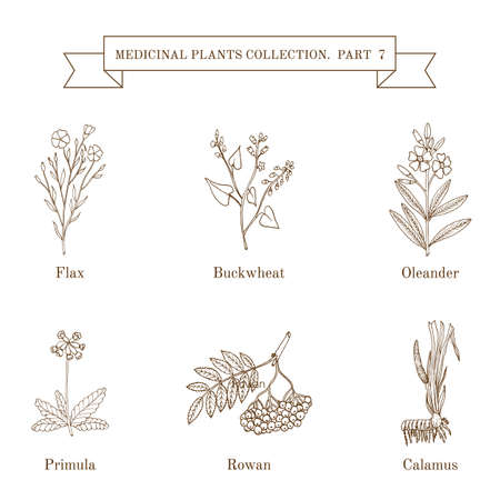 oleander: Vintage collection of hand drawn medical herbs and plants Illustration