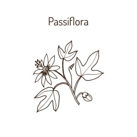 Passiflora, ou fleurs de passion