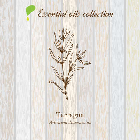tarragon: Tarragon, essential oil label, aromatic plant