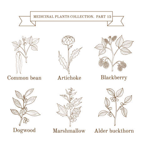 Vintage collection of hand drawn medical herbs and plants, common bean, artichoke, blackberry, dogwood, marshmallow, alder buckthorn