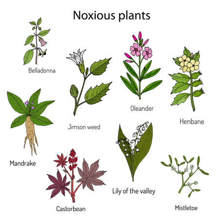 Poisonous plants collection. Illustration