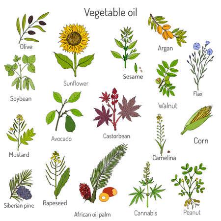 verzameling van verschillende oliehoudende planten