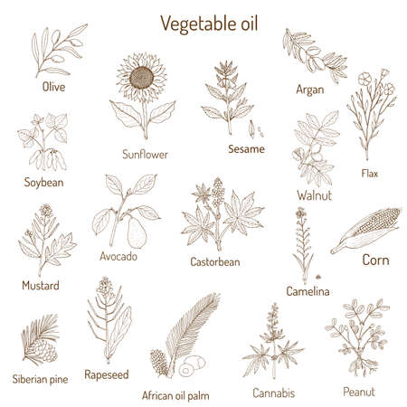 collection of different oil plants