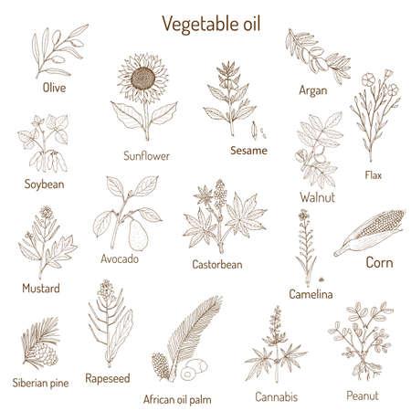 Sammlung verschiedener Ölpflanzen Standard-Bild - 73926098