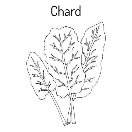 Mangold Beta vulgaris of Zwitserse chard