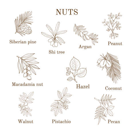 Collection of different nut branches