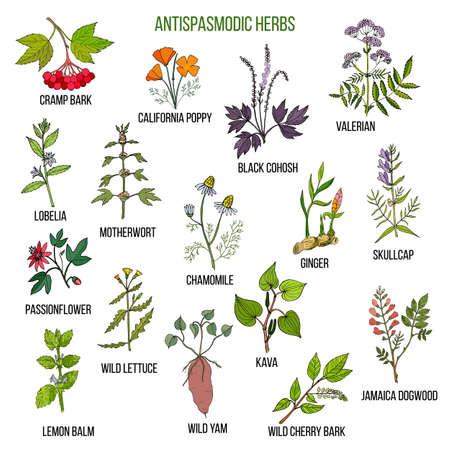 Antispasmodic herbs. Hand drawn set of medicinal plants