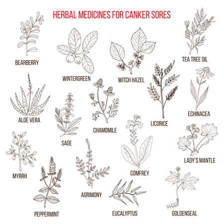 Beste kruidengeneesmiddelen voor kankerzweren