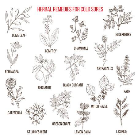 Best herbal remedies for cold sores Vektorové ilustrace