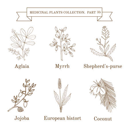 Vintage collection of hand drawn medical herbs and plants Ilustração