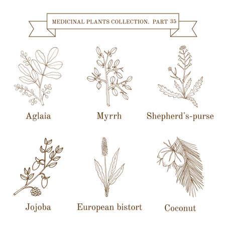 Vintage-Kollektion von Hand gezeichnet medizinische Kräuter und Pflanzen Standard-Bild - 74369866