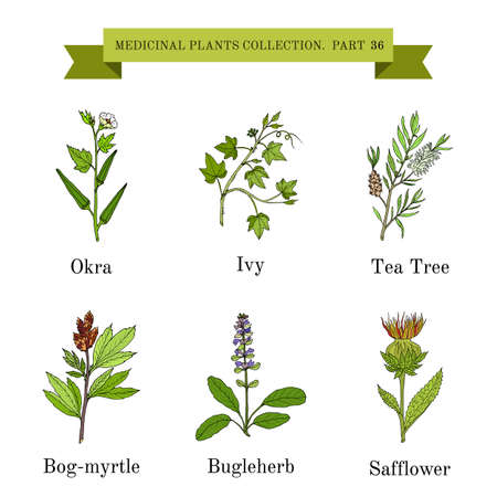 Vintage collection of hand drawn medical herbs and plants Illustration