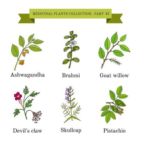 Vintage colección de hierbas y plantas médicas dibujados a mano