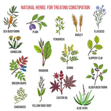 Bestes pflanzliches Heilmittel zur Behandlung von Verstopfung
