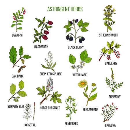 Herbes astringentes. Ensemble dessiné à la main de plantes médicinales Vecteurs
