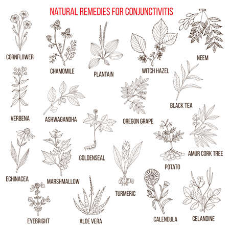 calendula: Best herbal remedies for conjunctivitis.