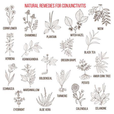 Les meilleurs remèdes à base de plantes pour la conjonctivite.