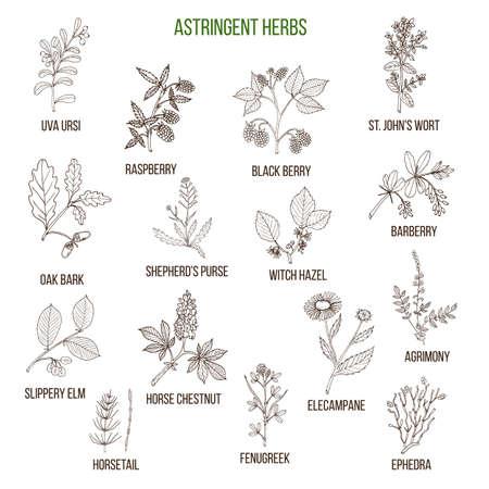 herbes astringentes. ensemble dessiné à la main
