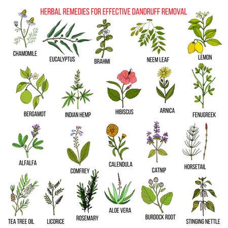 Los mejores remedios herbarios para la eliminación eficaz de la caspa Foto de archivo - 74369897
