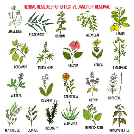 Best herbal remedies for effective dandruff removal