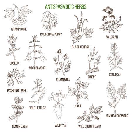 herbes antispasmodiques. ensemble dessiné à la main des plantes médicinales