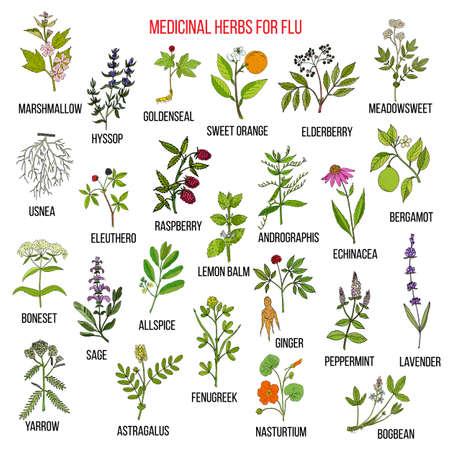 Najlepsze zioła lecznicze na grypę