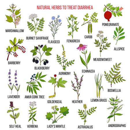 Best medicinal herbs to treat diarrhea Vettoriali