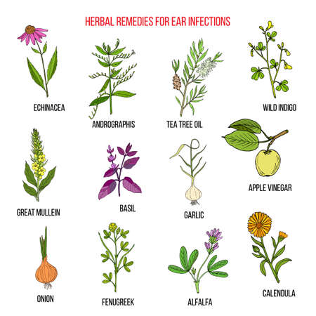 Best medicinal herbs for ear infections