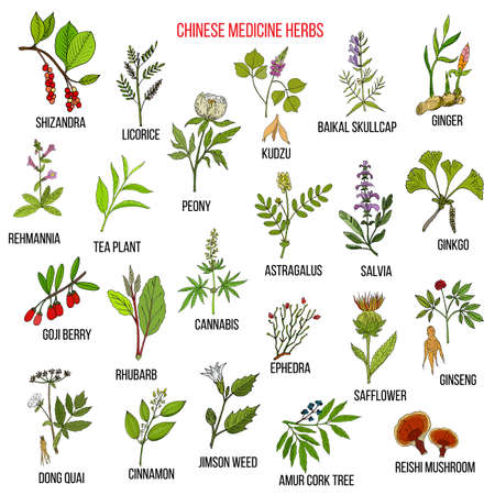 Chinese medicinal herbs Stock Illustratie