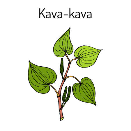 Kava-kava piper methysticum , medicinal plant