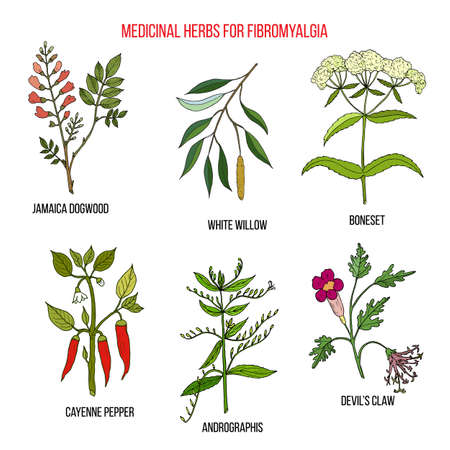 Best herbal remedies for fibromyalgia Illustration