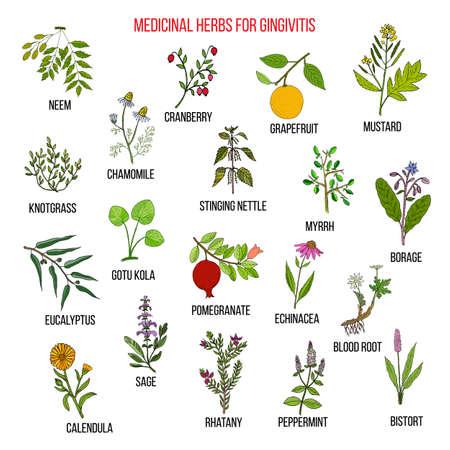 Beste pflanzliche Heilmittel für Gingivitis Standard-Bild - 74425425