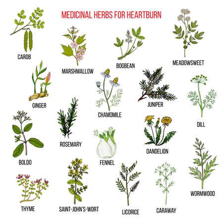 Beste pflanzliche Heilmittel für Sodbrennen