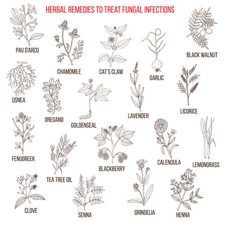 Best herbal remedies for fungal infections Illustration