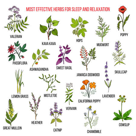 Best herbal remedies for sleep and relaxation