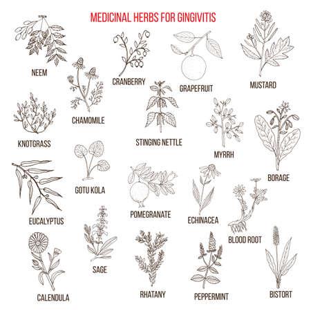 calendula: Best herbal remedies for gingivitis Illustration